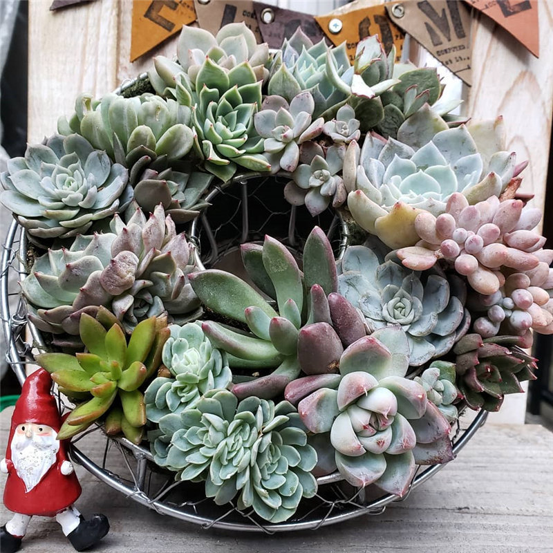 40 easy and creative succulent Ideas, them looks cute and difference. Check out these unique, inexpensive Diy succulent designs that you can easily create for your home. Try and enjoy! | soflyme.com