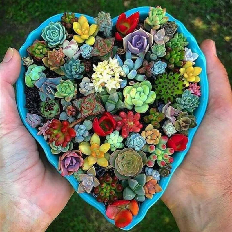 40 easy and creative succulent Ideas, them looks cute and difference. Check out these unique, inexpensive Diy succulent designs that you can easily create for your home. Try and enjoy!   soflyme.com